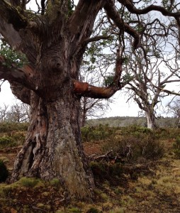 Beautiful twisted trees
