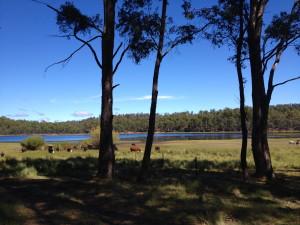 Pine Tier Lagoon