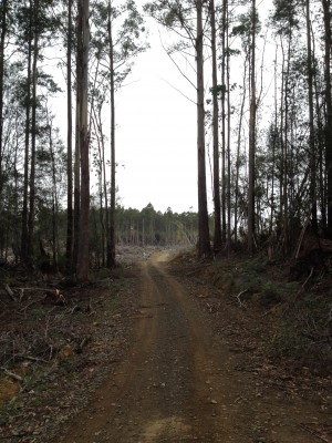 Entering clearing on Boney Road